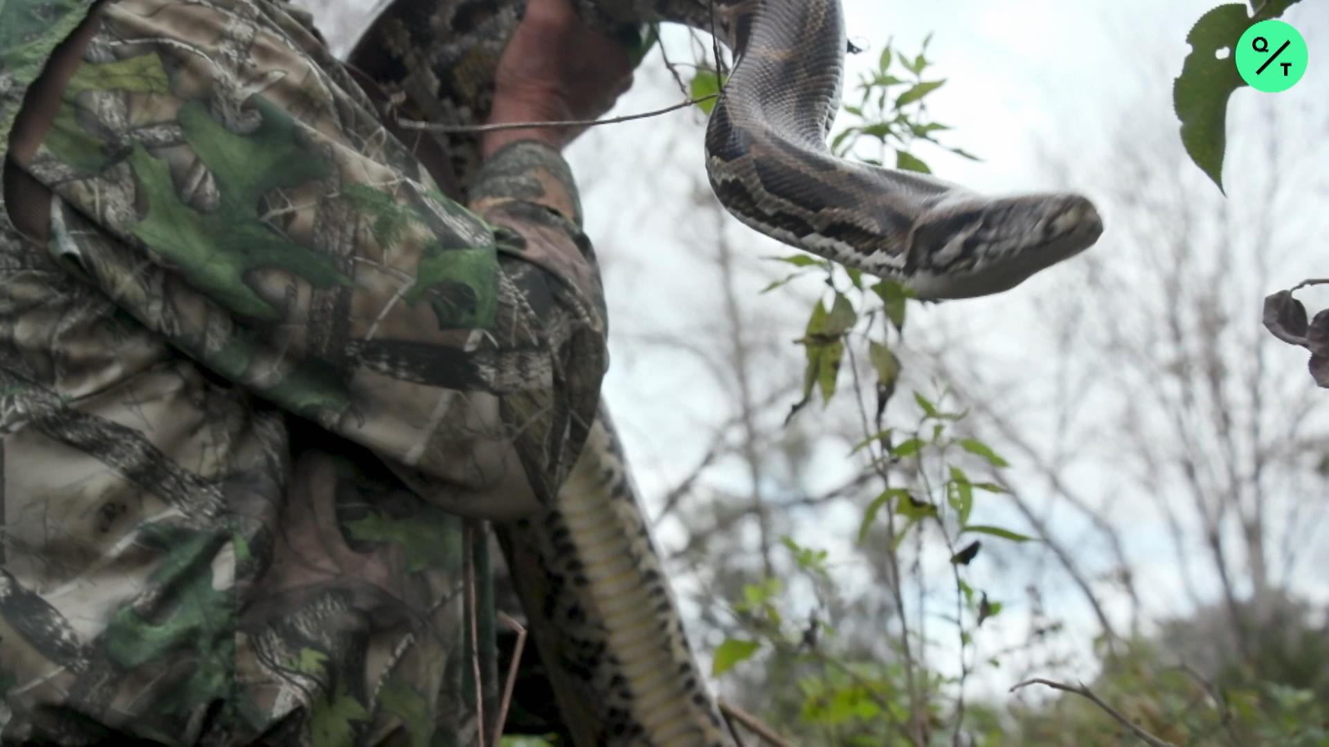 Python Hunters Are Saving The Everglades