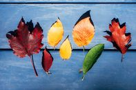 relates to Take a Professional's Advice When Photographing Fall Foliage