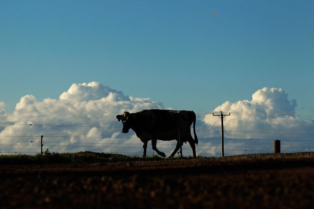 U.S. Farm Income to Hit 12-Year Low