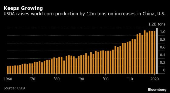 Grain Traders Shrug Off U.S.'s Outlook for Bigger Supplies