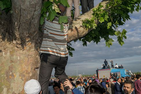 An AKP supporter climbs a tree to get a look at Erdogan.