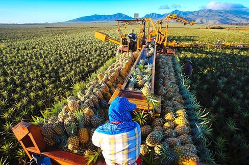 Why Dole Desperately Wants to Go Private Again