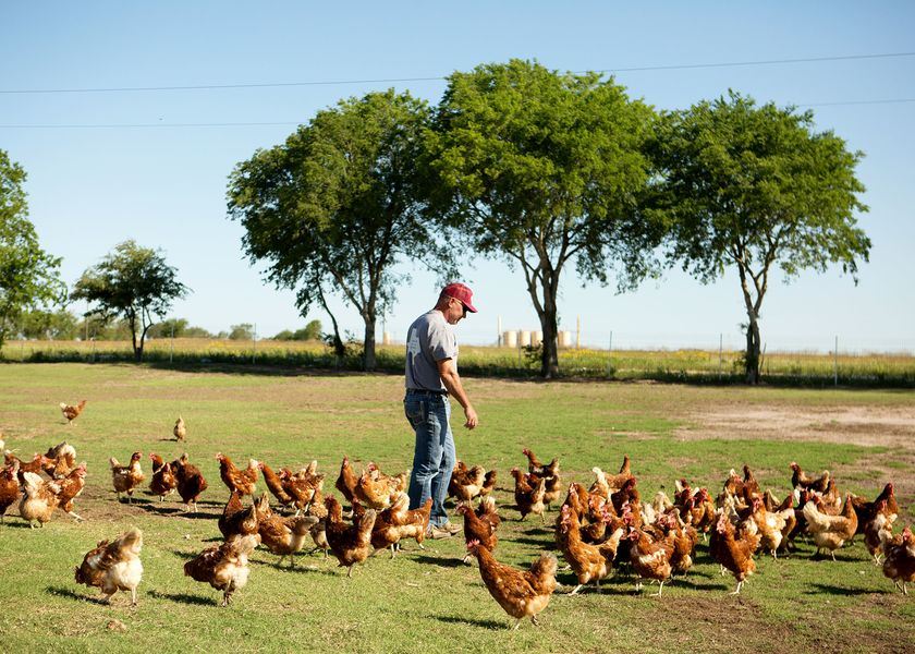 relates to Climate-Friendly Eggs Are Here. Will Consumers Bite?