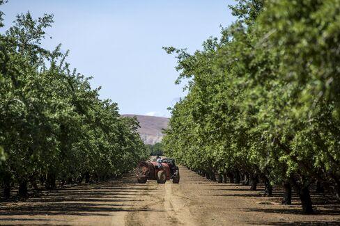 1473760354_Almond-trees