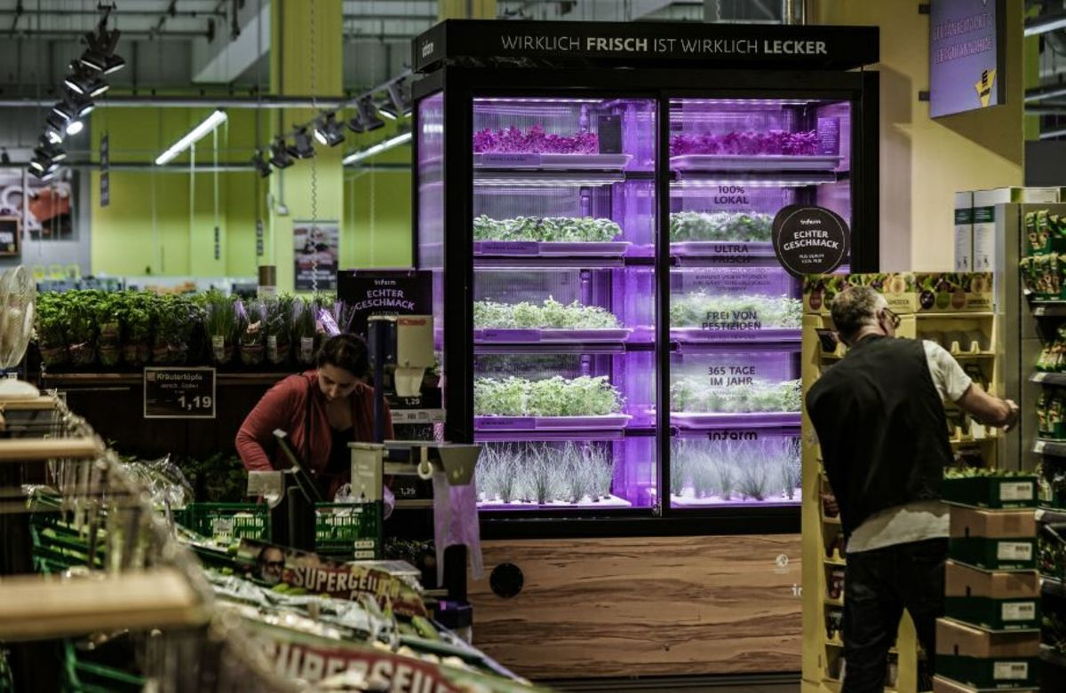Kroger Brings Farming to Its Stores in Push to Get Greener (and Sell More Kale)