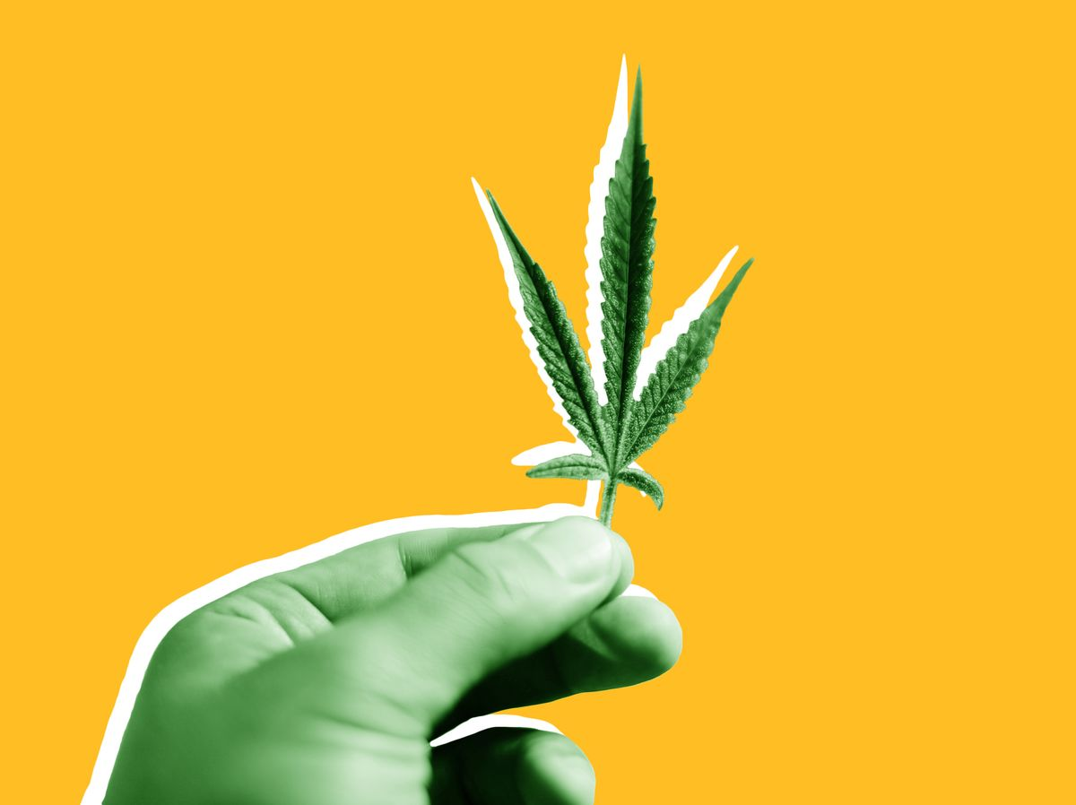 What the Marijuana Genome Map Means for the Future of Pot