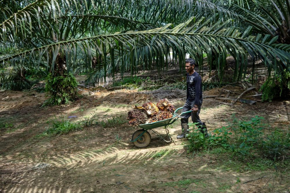 Malaysia Prepares to Boost Palm-Biofuel Use in Wake of EU Limits