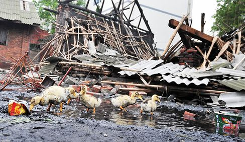 China Finds Dead Ducks in Sichuan in Latest Environment Scare