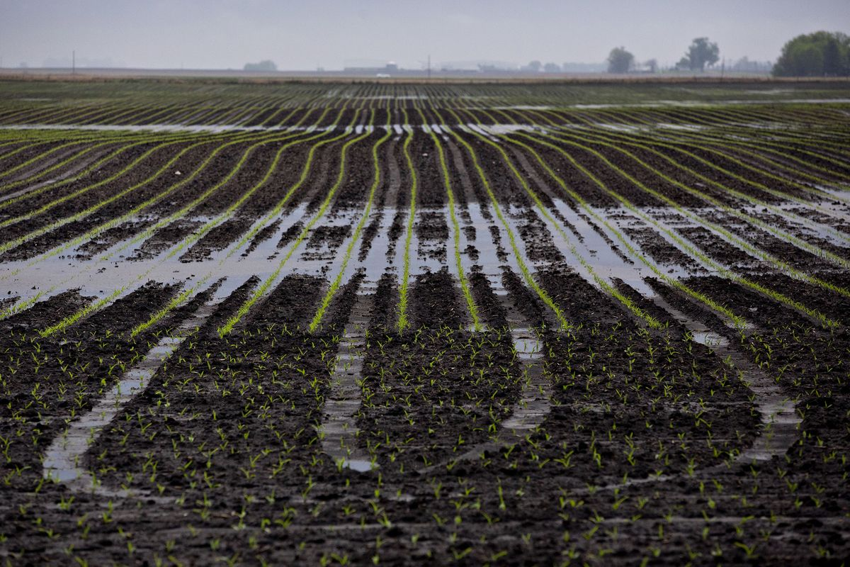 Unrelenting Rain Puts U.S. Farmers on Insurance-Deadline Watch