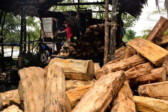 A Starchy Palm Tree Extract May Be Indonesia's Answer to Rice