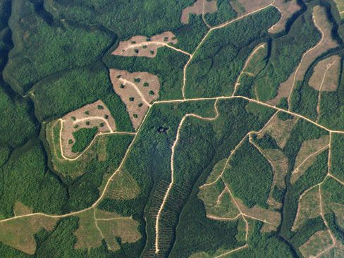 A network of service roads links three parcels of recently clearcut land to tracts of older growth in the interior of Quebec's Gaspé Peninsula, one of Canada's most productive logging regions.