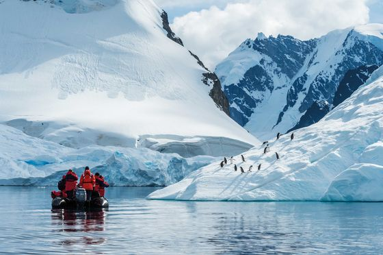 Travel Industry Sees Glimmers of Recovery in Africa, Antarctica