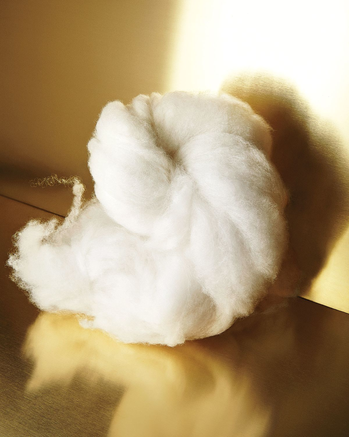 what kind of animal does cashmere come from