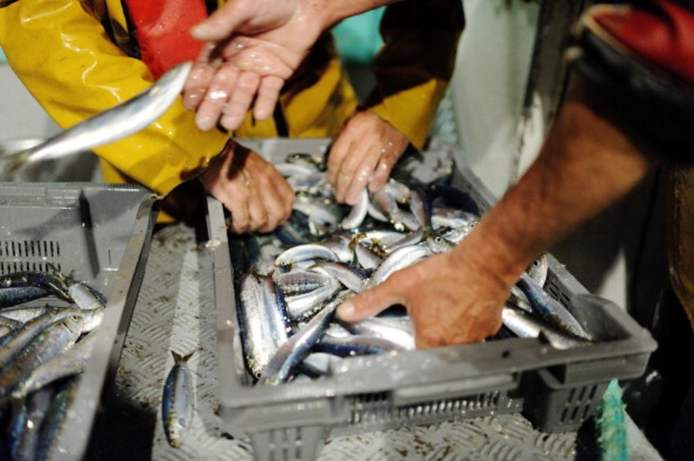 Overfishing Doesn't Just Hurt the Fish