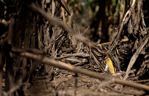Storm Seen Easing Drought for Moisture-Starved U.S. Wheat Crops