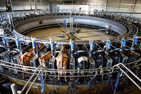 Van Diemen's Land dairy.